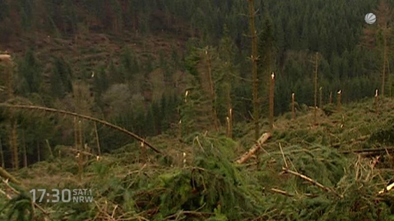 Waldbesitzer fordert 10 Millionen Euro von Landesregierung (Foto: SAT.1 NRW)