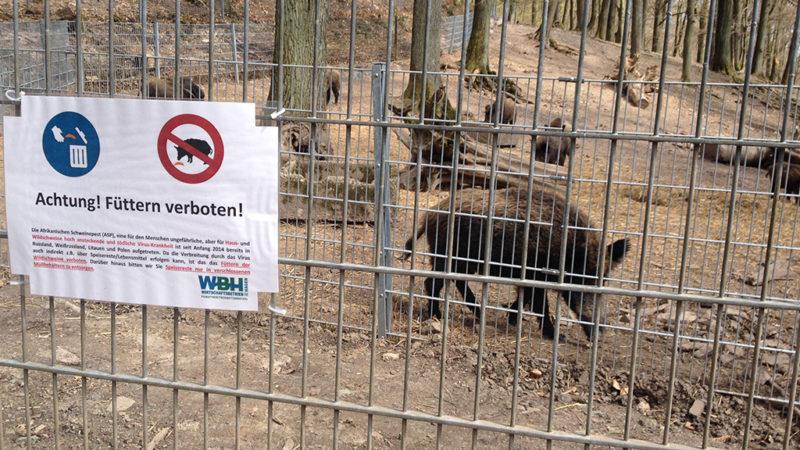 Die Wildschweine kommen (Foto: SAT.1 NRW)