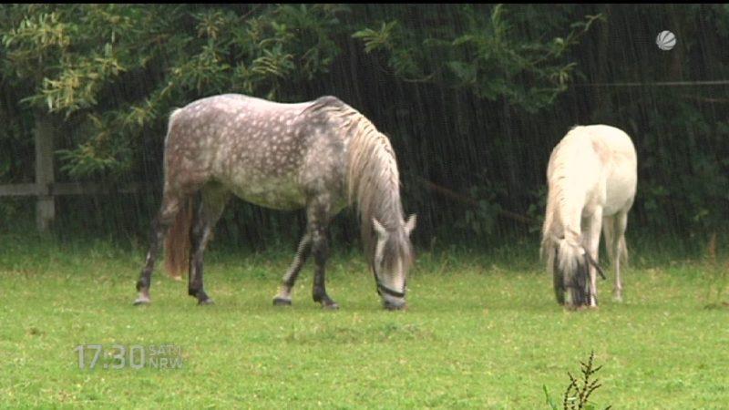 Messerangriff auf Pferd (Foto: SAT.1 NRW)