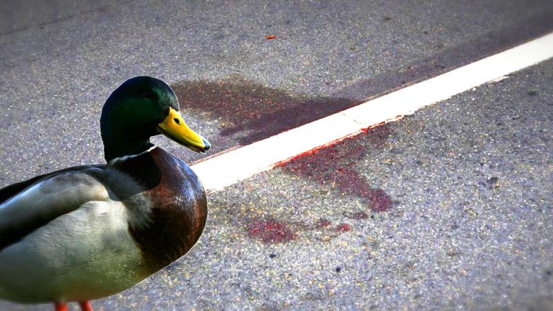 Absichtlich Enten überfahren?! (Foto: SAT.1 NRW)