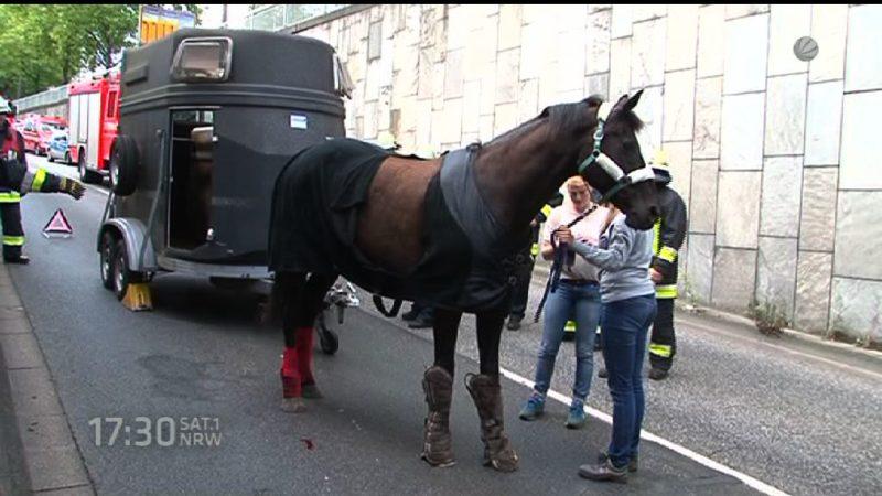 Pferd fällt aus Anhänger (Foto: SAT.1 NRW)