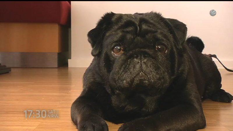 Bettensteuer für Hunde (Foto: SAT.1 NRW)