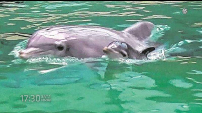 Daten über Delfine (Foto: SAT.1 NRW)