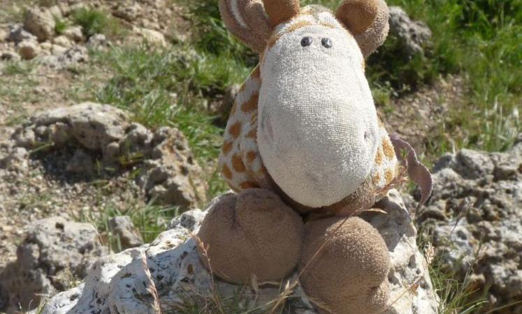 Hilfe: Wer hat Raffi gesehen? (Foto: SAT.1 NRW)