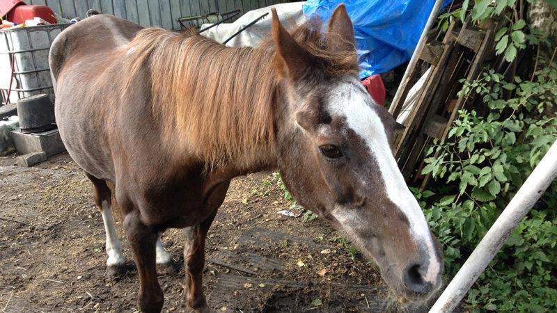 Künstlerin bemalt Pferd (Foto: SAT.1 NRW)