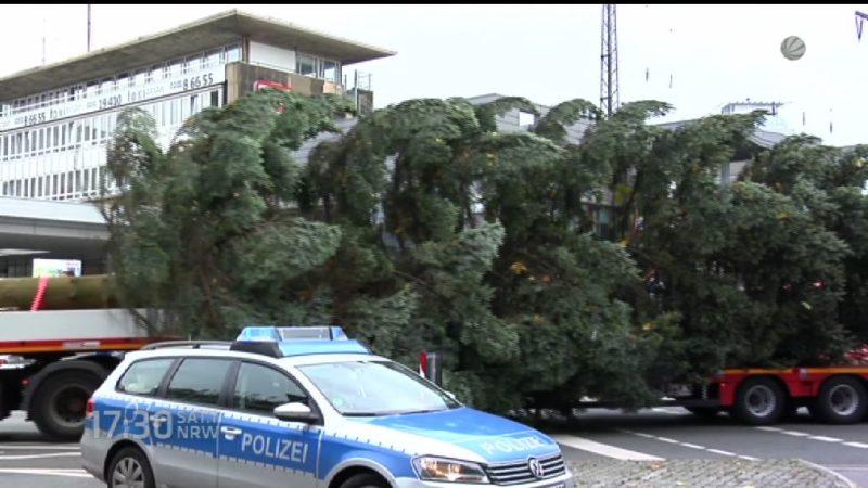 Riesen-Weihnachtsbaum wird durch Essen transportiert (Foto: SAT.1 NRW)