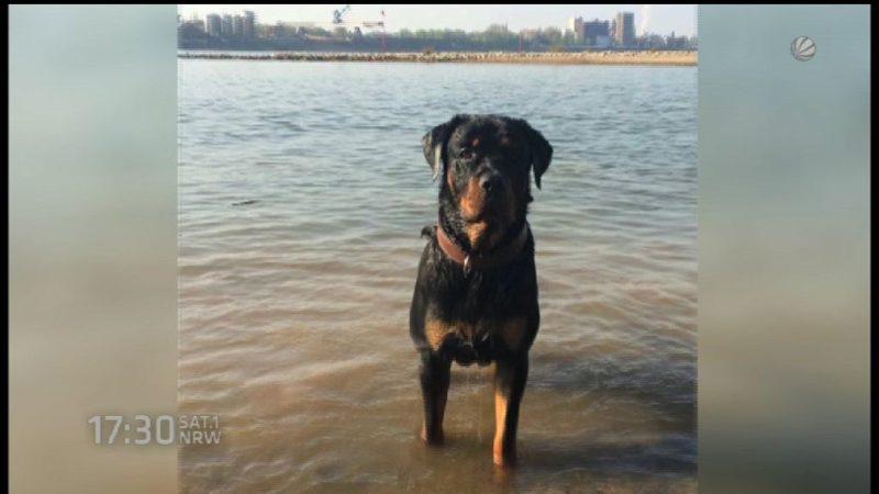 """Besitzer von Rottweiler """"Pascha"""" angeklagt (Foto: SAT.1 NRW)"""