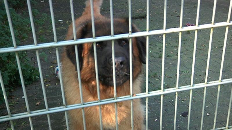 Spendenbereitschaft überfordert Tierheim (Foto: Symbolbild SAT.1NRW)