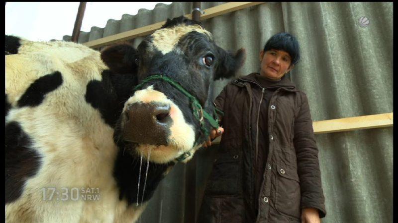 Kuh Belinda soll leben! (Foto: SAT.1 NRW)