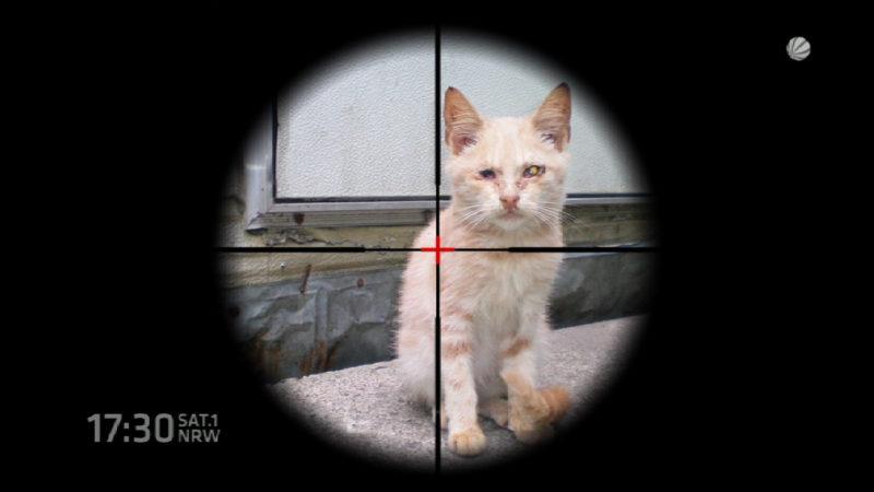 Umweltminister lässt Katzen zählen (Foto: SAT.1 NRW)