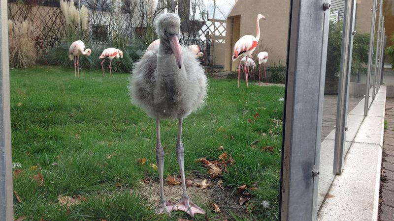 Hallo, ich bin Horst-Kevin! (Foto: SAT.1 NRW)