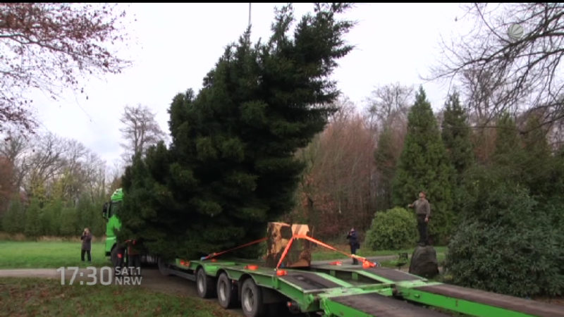 Weihnachtsbaum für Merkel aus Düsseldorf (Foto: SAT.1 NRW)