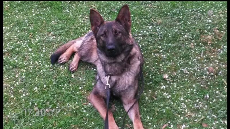 Hunde mit Drogen vergiftet (Foto: SAT.1 NRW)