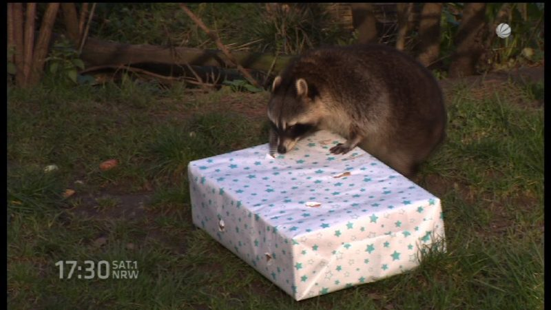 Geschenke im Zoo (Foto: SAT.1 NRW)