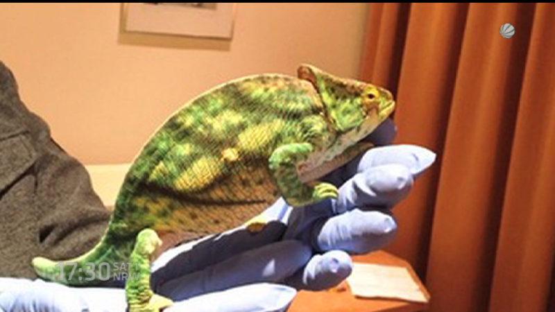 Reptilien beschlagnahmt (Foto: SAT.1 NRW)