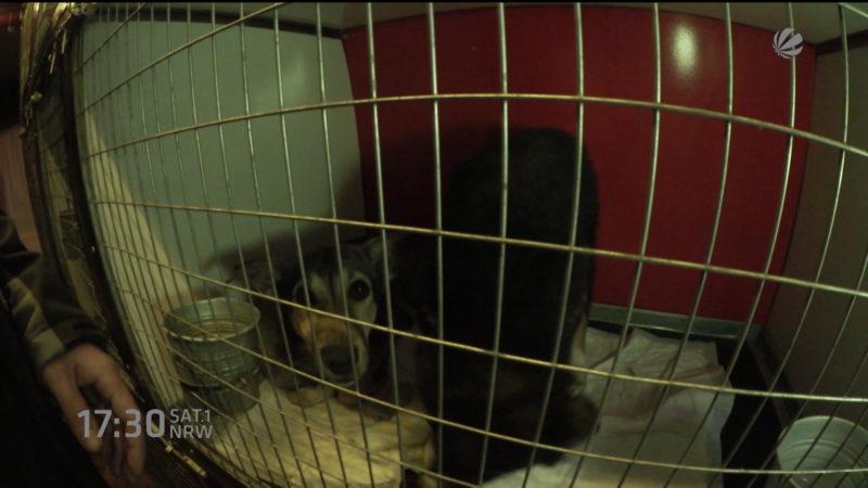 Hunde gerettet (Foto: SAT.1 NRW)