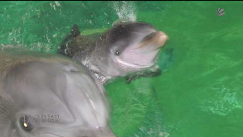 Delfinbaby in Duisburg gestorben (Foto: SAT.1 NRW)