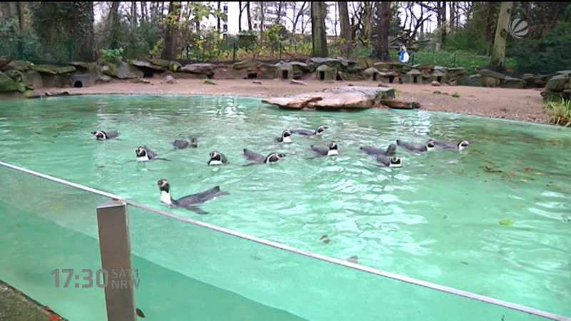 Zoo Dortmund baut neuen Zaun (Foto: SAT.1 NRW)