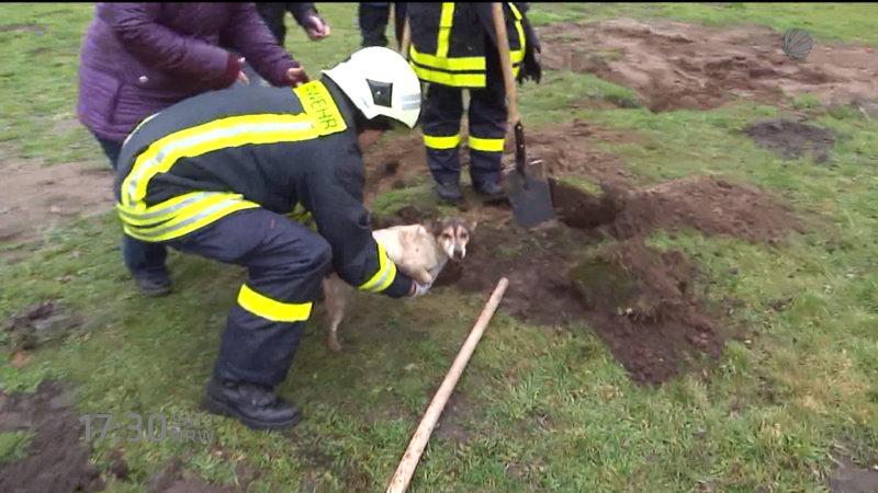 Hunderettung aus Fuchsbau (Foto: SAT.1 NRW)