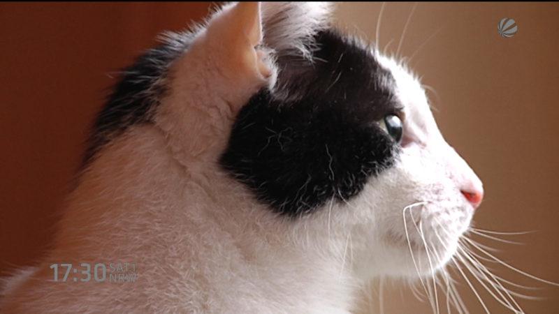 Auf Katze geschossen (Foto: SAT.1 NRW)