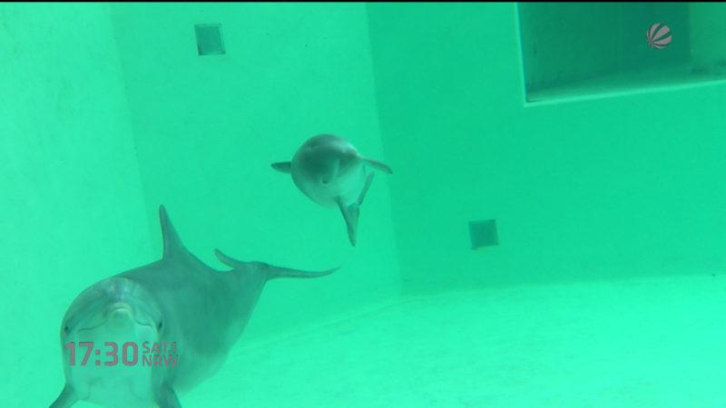 Delfinbaby in Duisburg vorgestellt (Foto: SAT.1 NRW)