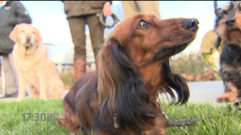 Messe Jagd und Hund wird vorgestellt (Foto: SAT.1 NRW)