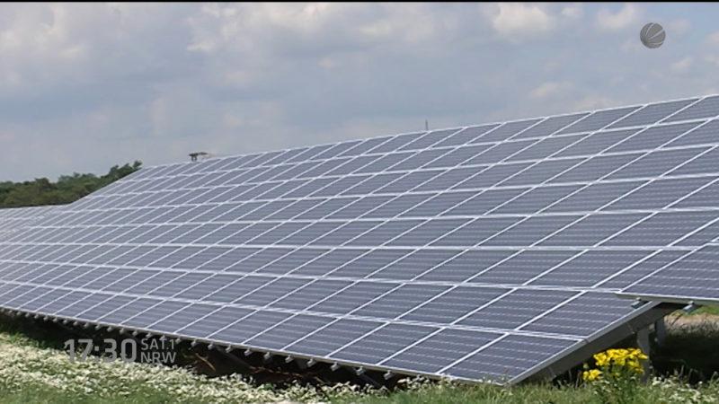 Gute Bilanz bei Solarworld (Foto: SAT.1 NRW)