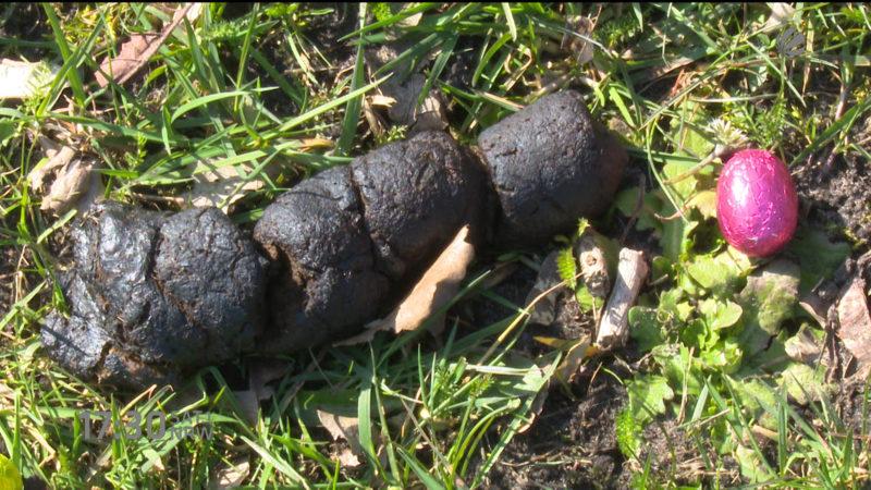Hundekot statt Eiersuche (Foto: SAT.1 NRW)