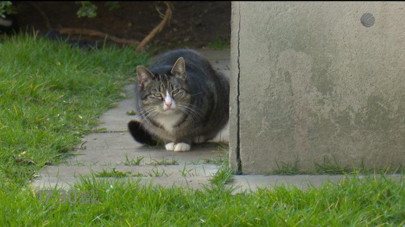 Suche nach Katzenmörder in Essen (Foto: SAT.1 NRW)
