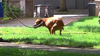 Hundekot statt Ostereier (Foto: SAT.1 NRW)