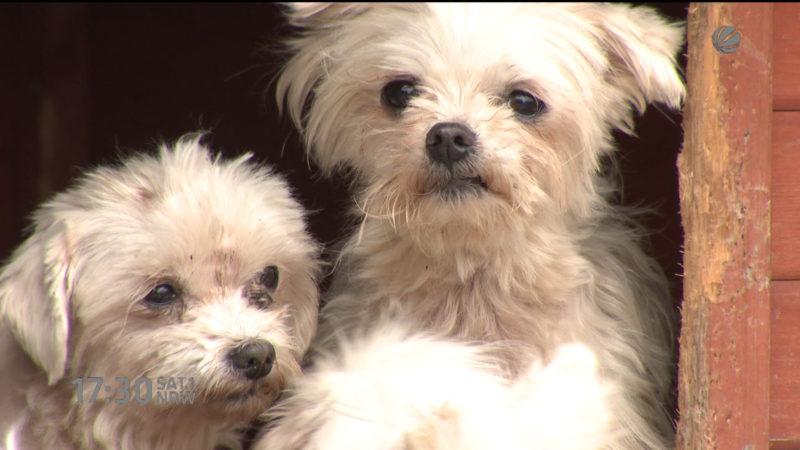 Hundewelpen suchen neuen Besitzer (Foto: SAT.1 NRW)