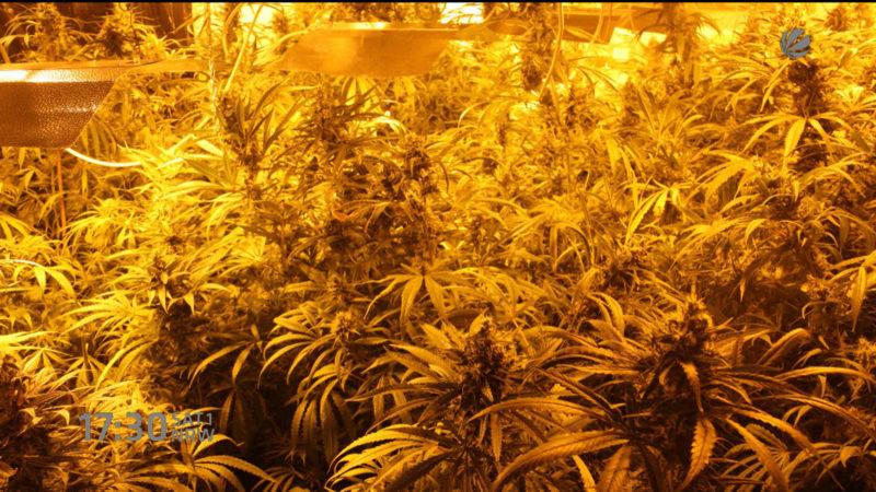 Cannabis Plantage gefunden (Foto: SAT.1 NRW)