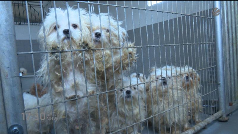 Stadt zahlt für Hunde (Foto: SAT.1 NRW)