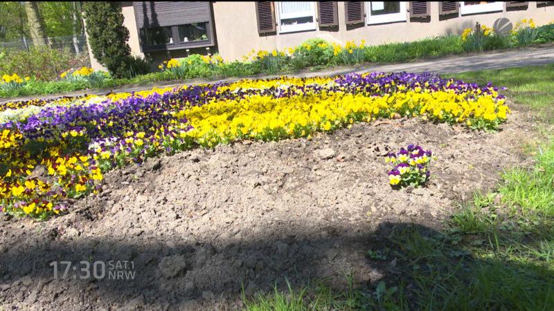 Blumenklau im großen Stil (Foto: SAT.1 NRW)