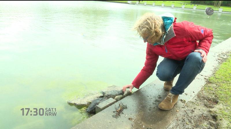 Wer rettet die Enten vom Aachener Weiher? (Foto: SAT.1 NRW)