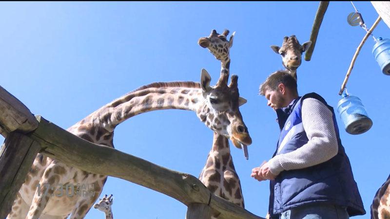 Huntelaar ist Giraffenpate (Foto: SAT.1 NRW)