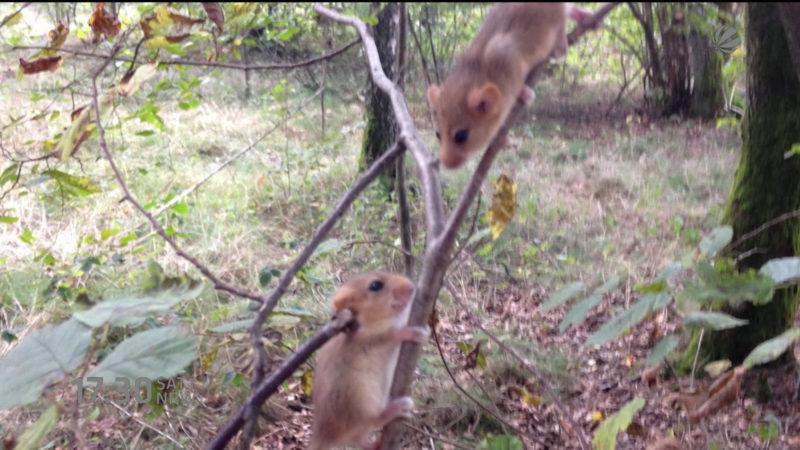 Teurer Zaun für kleine Maus (Foto: SAT.1 NRW)