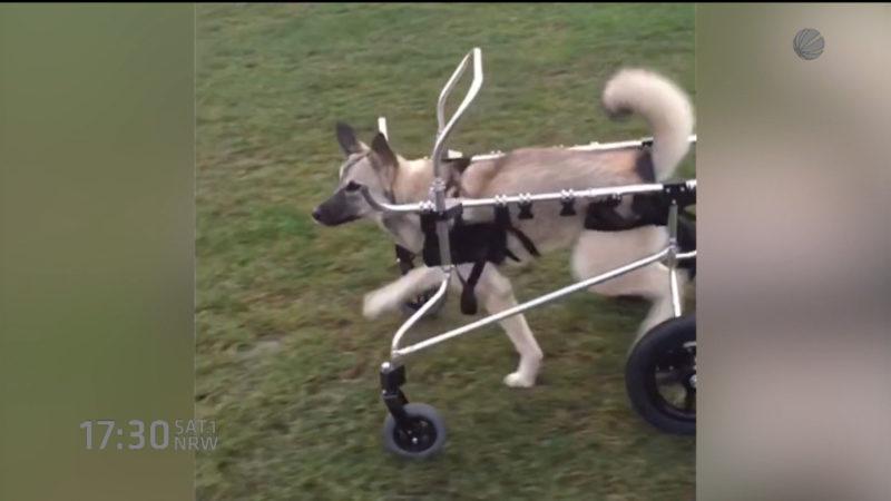 Kampf um behinderten Hund (Foto: SAT.1 NRW)