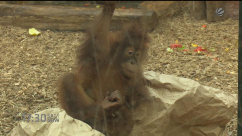 Kritik an Affen-Haltung (Foto: SAT.1 NRW)