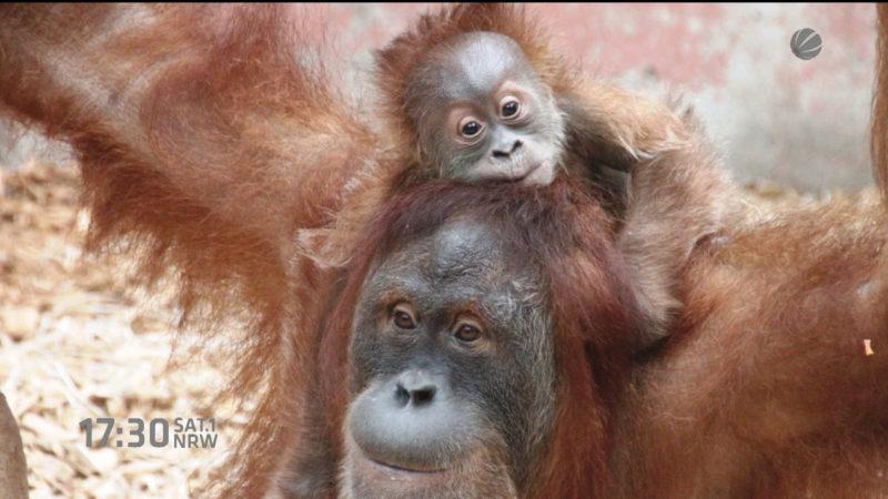 Äffchen im Zoo gestorben (Dortmund) (Foto: SAT.1 NRW)