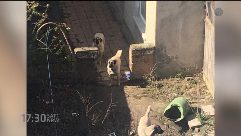Hunde mißhandelt? (Foto: SAT.1 NRW)