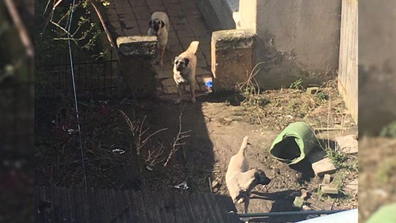 Schlechte Hundehaltung im Hinterhof? (Foto: Privat)