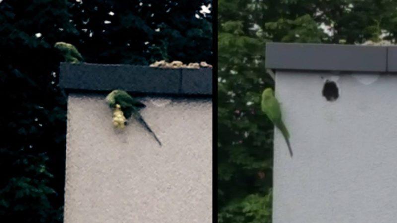 Papageien-Nest zugemauert (Foto: Privat)