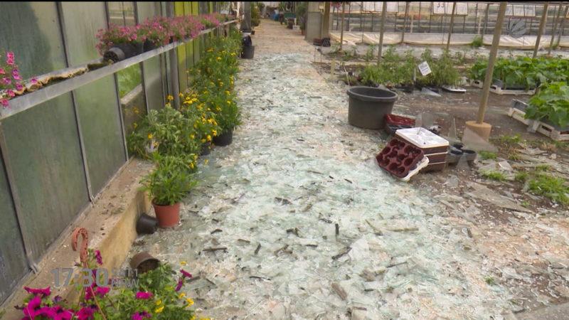 Hagel zerstört Gärtnerei (Foto: SAT.1 NRW)