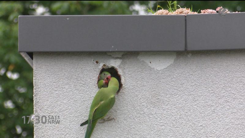 PETA verklagt Papageien-Quäler (Foto: SAT.1 NRW)