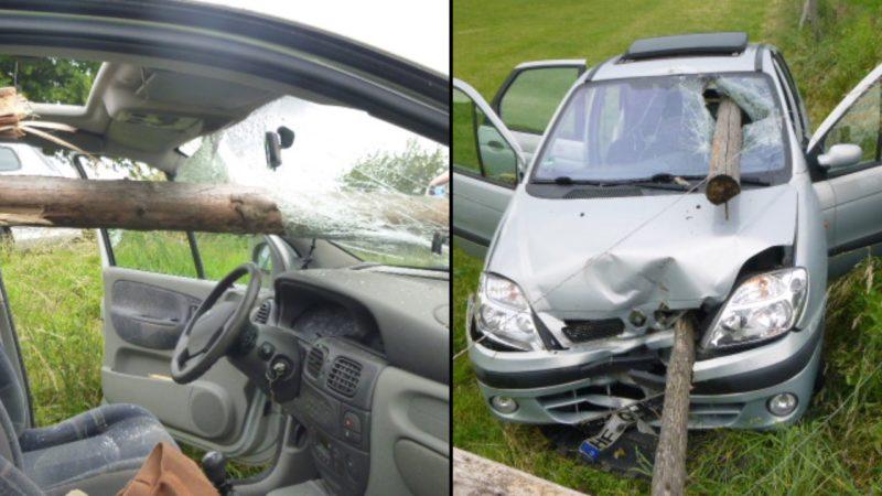 Wespe rettet Frau das Leben (Foto: Polizei Herford)