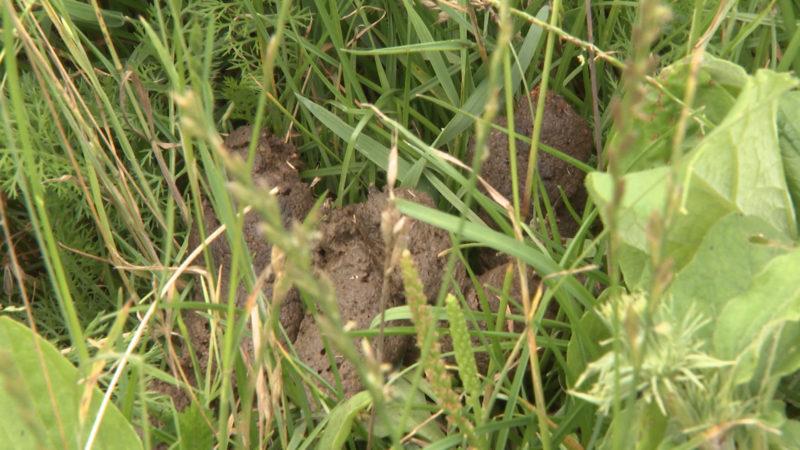 Hundehäufchen ärgern Landwirte (Foto: SAT.1 NRW)