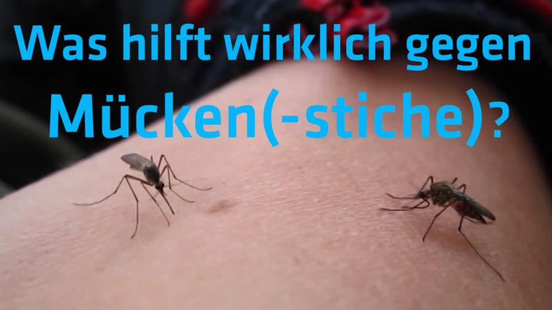 Was hilft wirklich gegen Mücken(-stiche) (Foto: SAT.1 NRW)