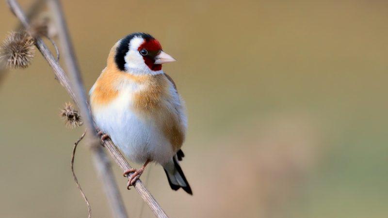 Vogelklau (Foto: NABU)