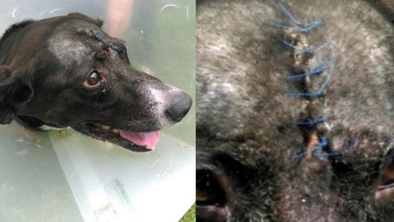 Hund wurde Schädel eingeschlagen (Foto: SAT.1 NRW)